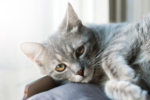 귀여운 작은 회색 고양이 초상화 클로즈업