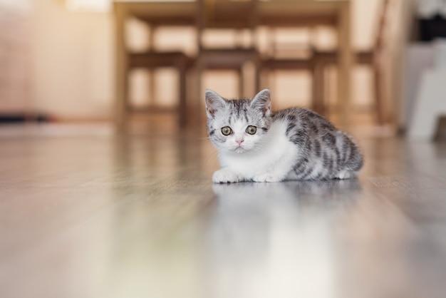 Милый маленький серый котенок в уютном доме
