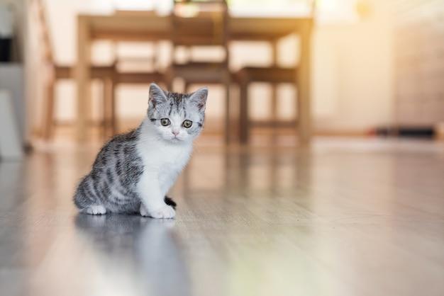아늑한 집에 있는 귀여운 회색 고양이