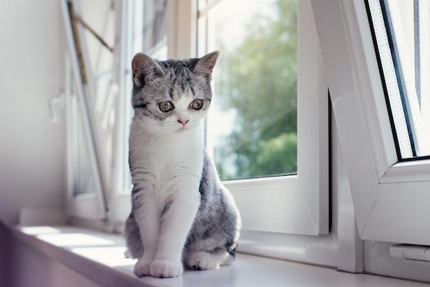居心地の良い家でかわいい灰色の子猫
