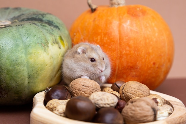 A cute little hamster in a plate with various nuts