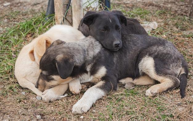 귀여운 작은 노숙자 잡종 강아지가 주인을 기다리고 있습니다.