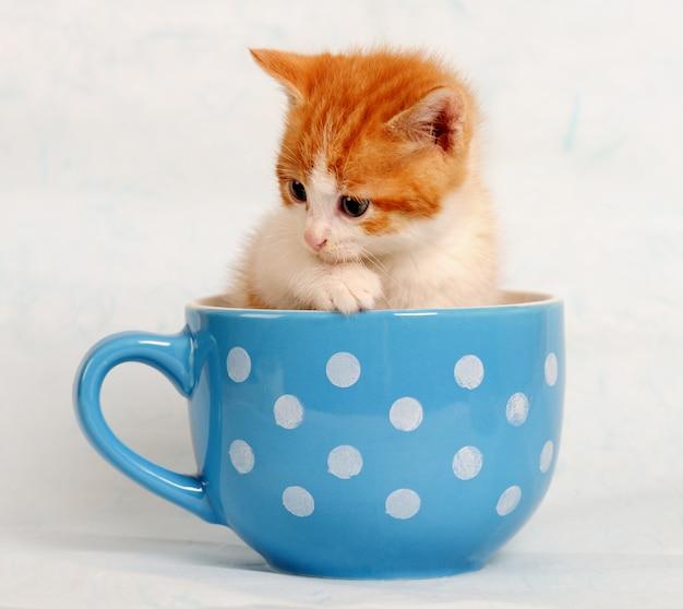 Cute little kitten in a blue cup