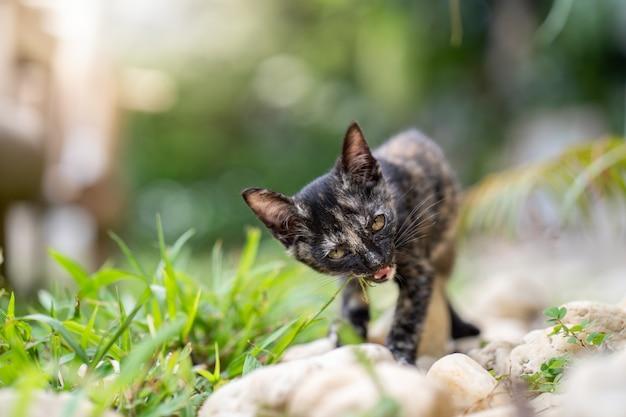 フィールドで草を食べるかわいい子猫