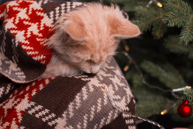 A cute little kitten is sitting down near a christmas tree .