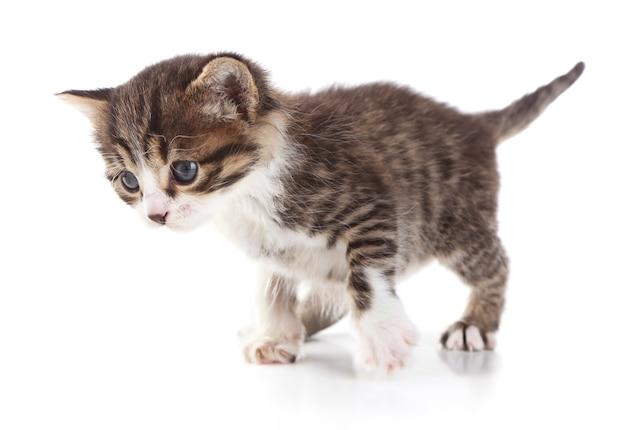 귀여운 작은 새끼 고양이, 흰색 절연