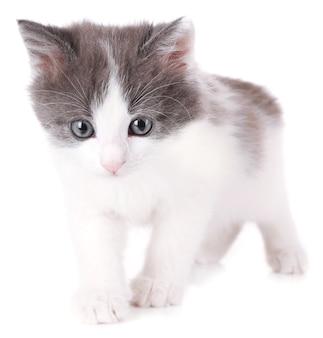 귀여운 작은 새끼 고양이 흰색 절연