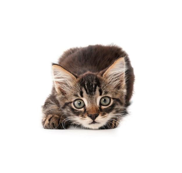 흰색 바탕에 귀여운 작은 새끼 고양이