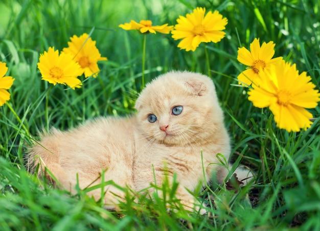 꽃 초원에 앉아 귀여운 작은 새끼 고양이