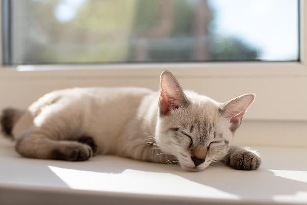 창가 집 애완 동물 근처에서 자고있는 귀여운 새끼 고양이