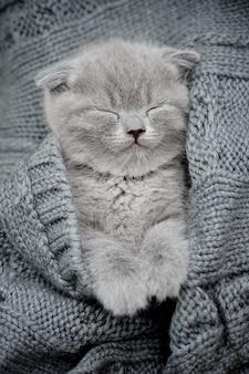 Cute little kitten sleeps on fur gray blanket
