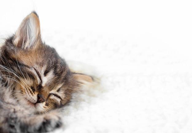 Cute little kitten sleeps on fur white blanket with copy space