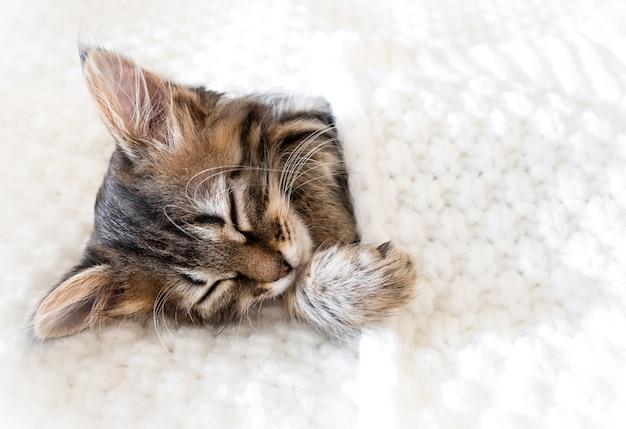 Милый маленький котенок спит на меховом белом одеяле с копией пространства