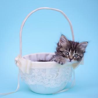 Cute little kitten in a white basket