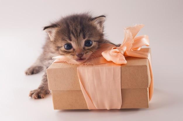Милый маленький котенок с подарочной коробкой на белом фоне