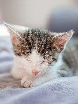 ピンクの鼻を持つかわいい子猫はソファで寝ています