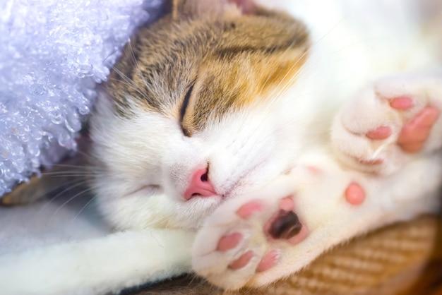 ピンクの足を持つかわいい子猫は毛布で眠る
