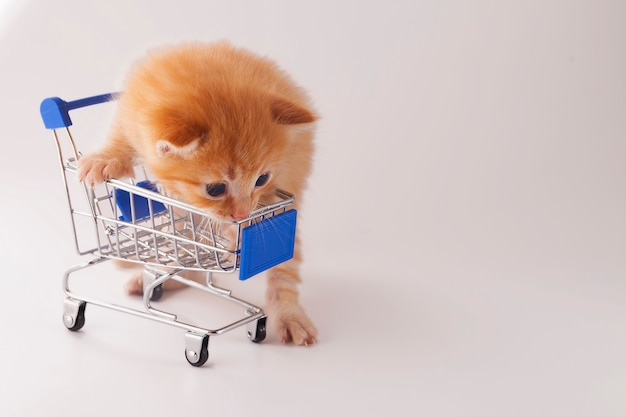 Cute little kitten with supermarket trolley on white background
