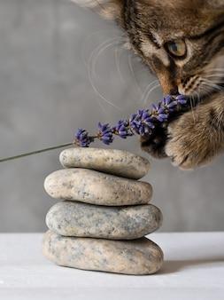 Милая маленькая кошечка пахнет ароматом лаванды.