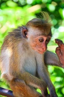 귀여운 작은 원숭이를 닫습니다.