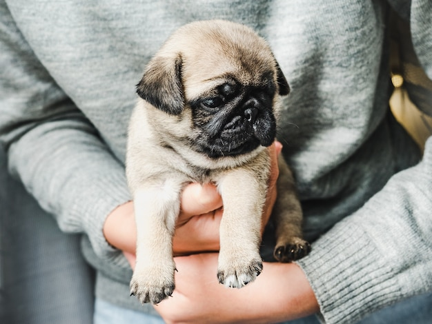 Cute little puppy held by its owner