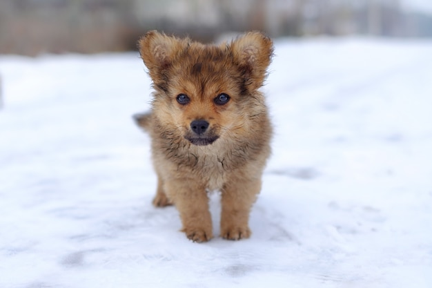 雪の中でかわいい子犬