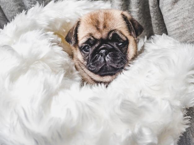 깃털 베개에 앉아 귀여운 작은 강아지