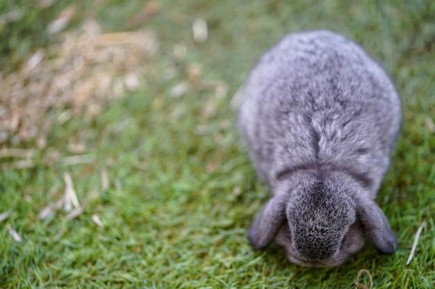 귀여운 작은 토끼