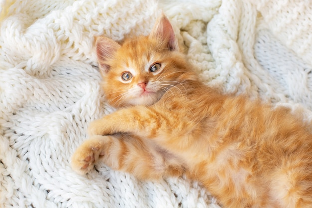 Cute little red kitten lies comfortably on white knitted scarf.