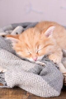 Милый маленький рыжий котенок спит на мягком пледе на ярком фоне