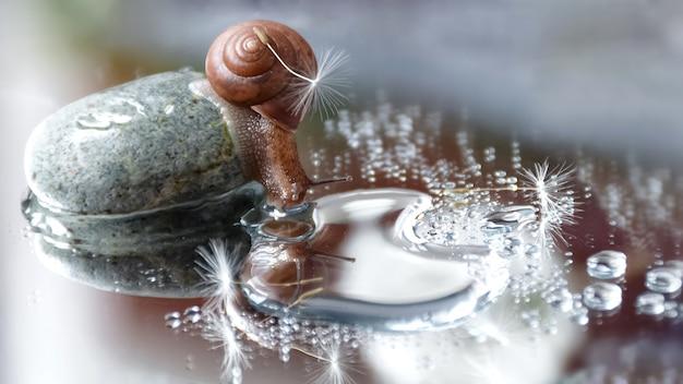 Милая маленькая улитка с семенами одуванчика на раковине сидит на большом камешке и смотрит в зеркало воды