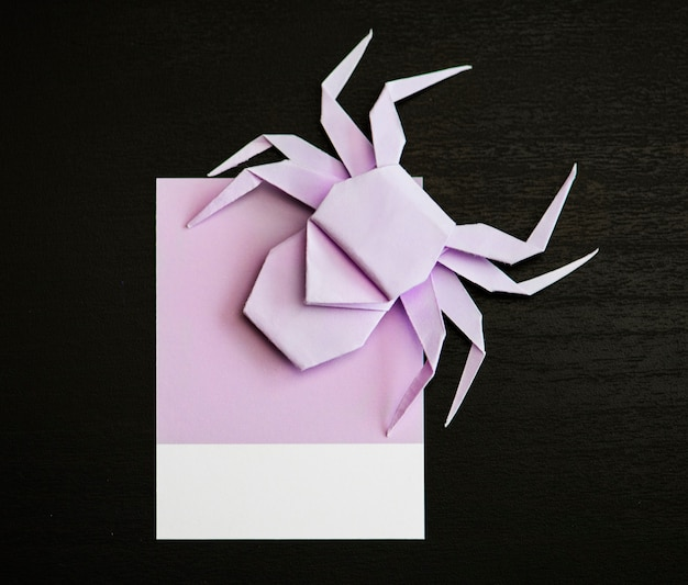 Cute little spider on a paper