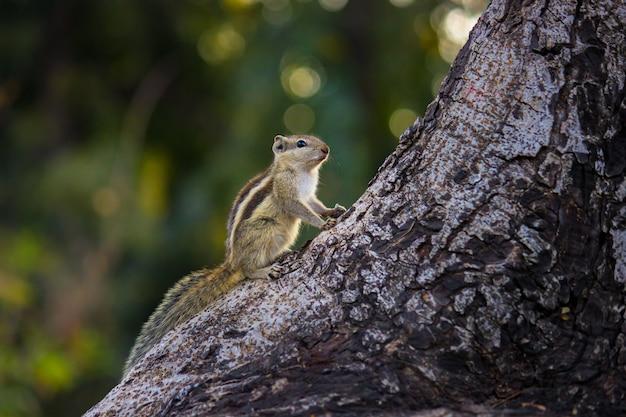 木の幹にかわいい小さなリス