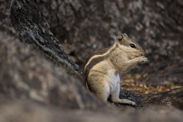 木の幹の上に座ってかわいいリス