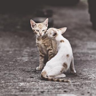 길거리에서 귀여운 작은 길 잃은 새끼 고양이