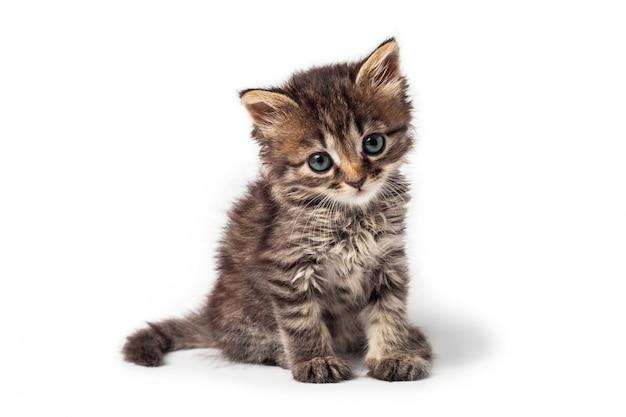 白い背景に分離されたかわいい小さな縞模様の子猫