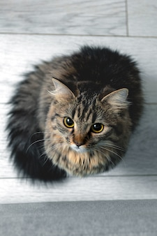 Cute little tabby kitten sitting on the floor and looking up. high quality photo
