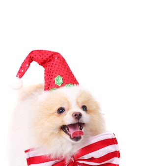 Cute merry smiling spitz puppy in a santa cap idea for christmas card copy space