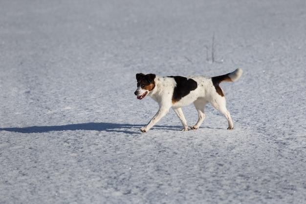 눈 덮인 겨울 들판을 산책하는 귀여운 혼혈 개