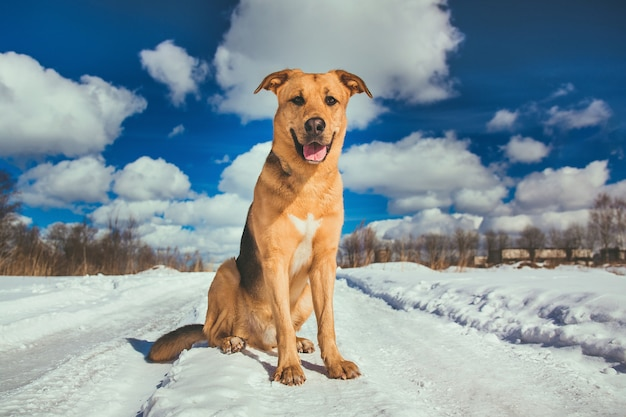 Cute mixed breed dog outside. mongrel in the snow