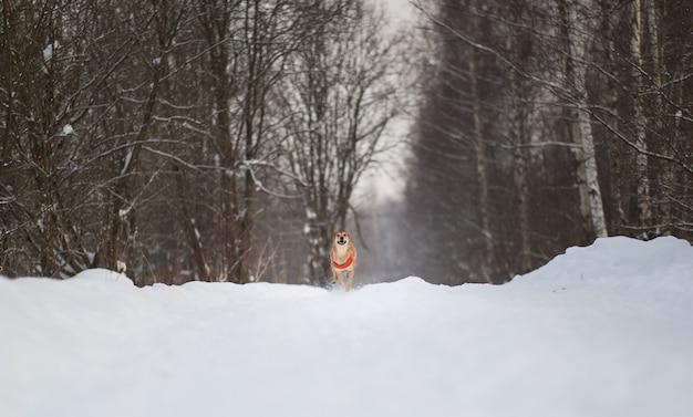 公園を歩いているかわいい雑種犬。雪の中で雑種
