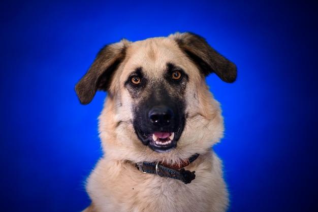 Cute mongrel dog. portrait.