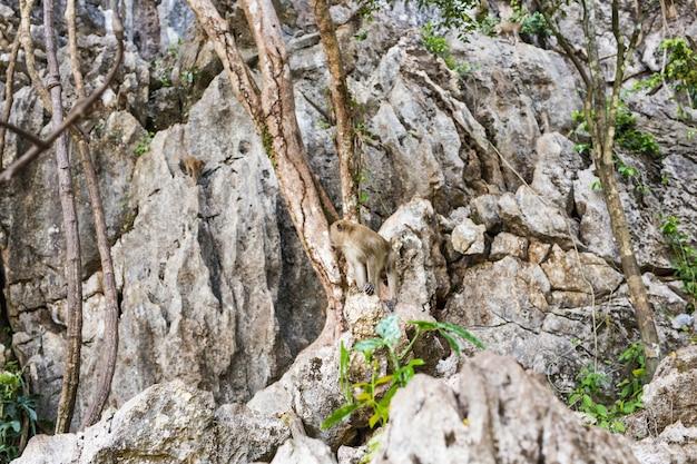 Милая обезьянка живет в естественном лесу таиланда.