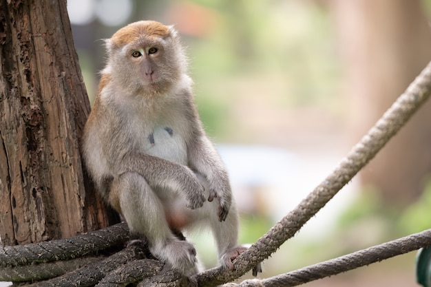 A cute monkey lives in a natural forest of thailand