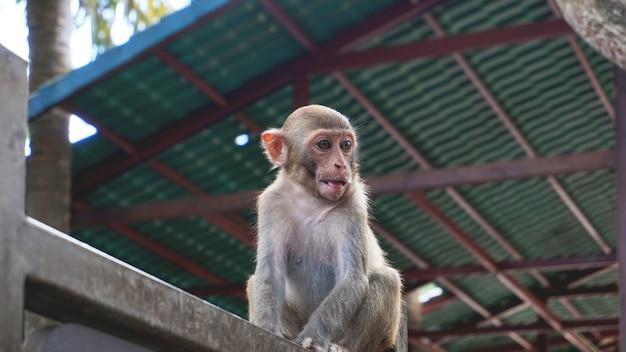 A cute monkey sits on an iron bar - china, hainan