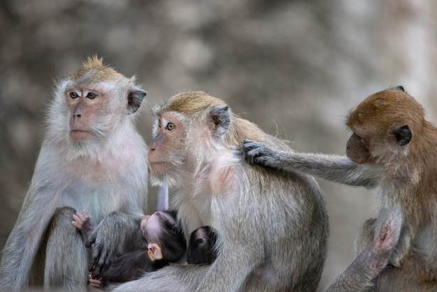 Cute monkeys family.