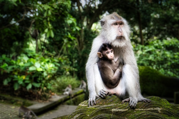Cute mother macaque monkey holding its baby