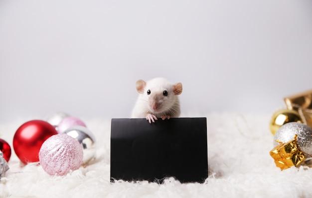 その足にレイアウトを持つかわいいマウス