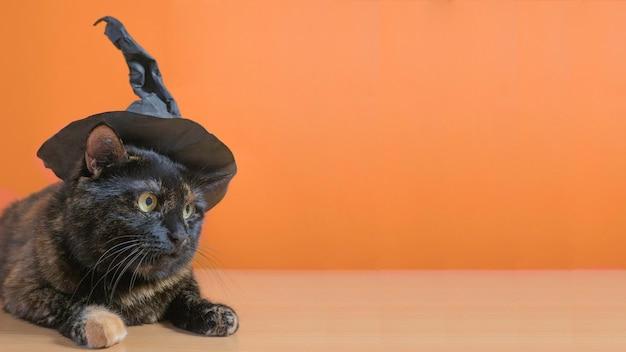 주황색 배경에 마녀 모자를 쓴 귀여운 다색 고양이. 할로윈 휴가.