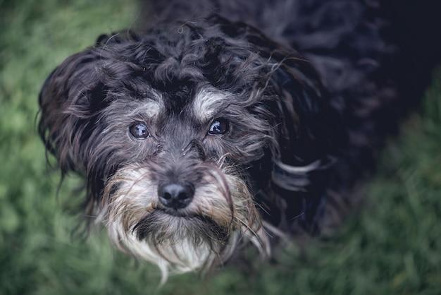 黒犬のかわいいオーバーヘッドクローズアップショット